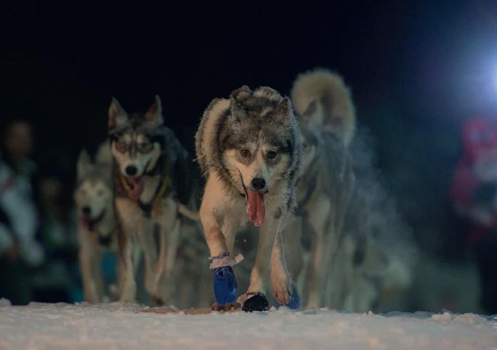 les-alpes-version-cop21-chiens