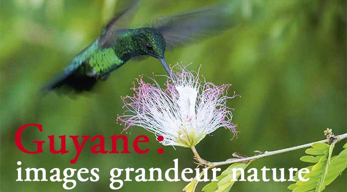 header-article-guyane-cayenne-images-grandeur-nature