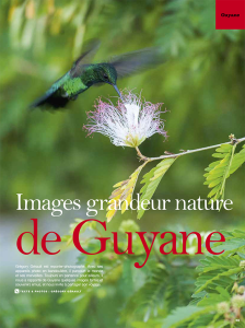une-article-guyane-cayenne-images-grandeur-nature
