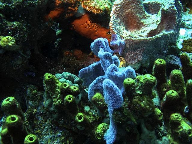 plongée en Martinique