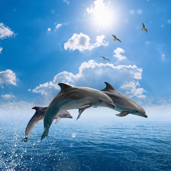 voir des dauphins en Martinique